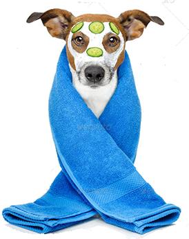 SPA для собак в подарок